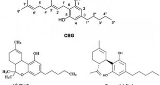 Read Dr Maroon's Latest Article on CBD